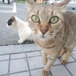 やっぱりネコさんはかわいい♪