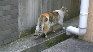 ネコさん、たくさん