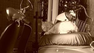 バイクの上のネコ